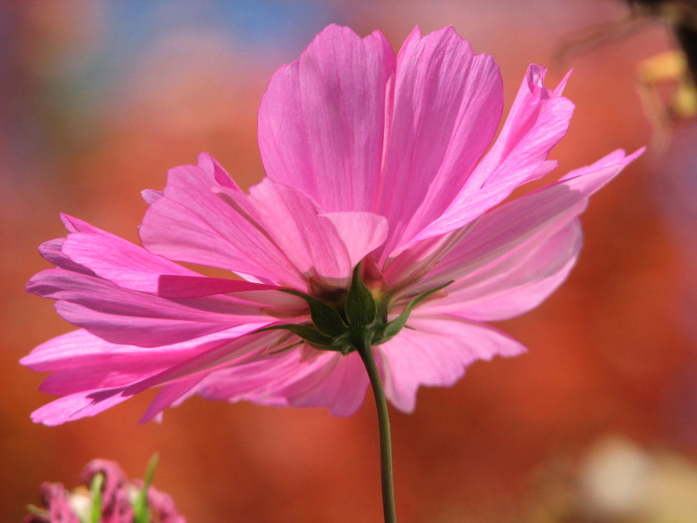 Pretty In Pink by Vivian Wilcox