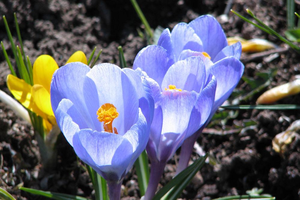 Spring Has Sprung by Vivian Wilcox