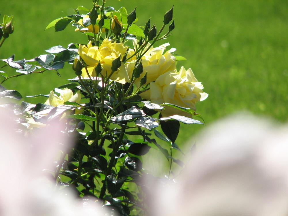 Garden Glimpse by Vivian Wilcox