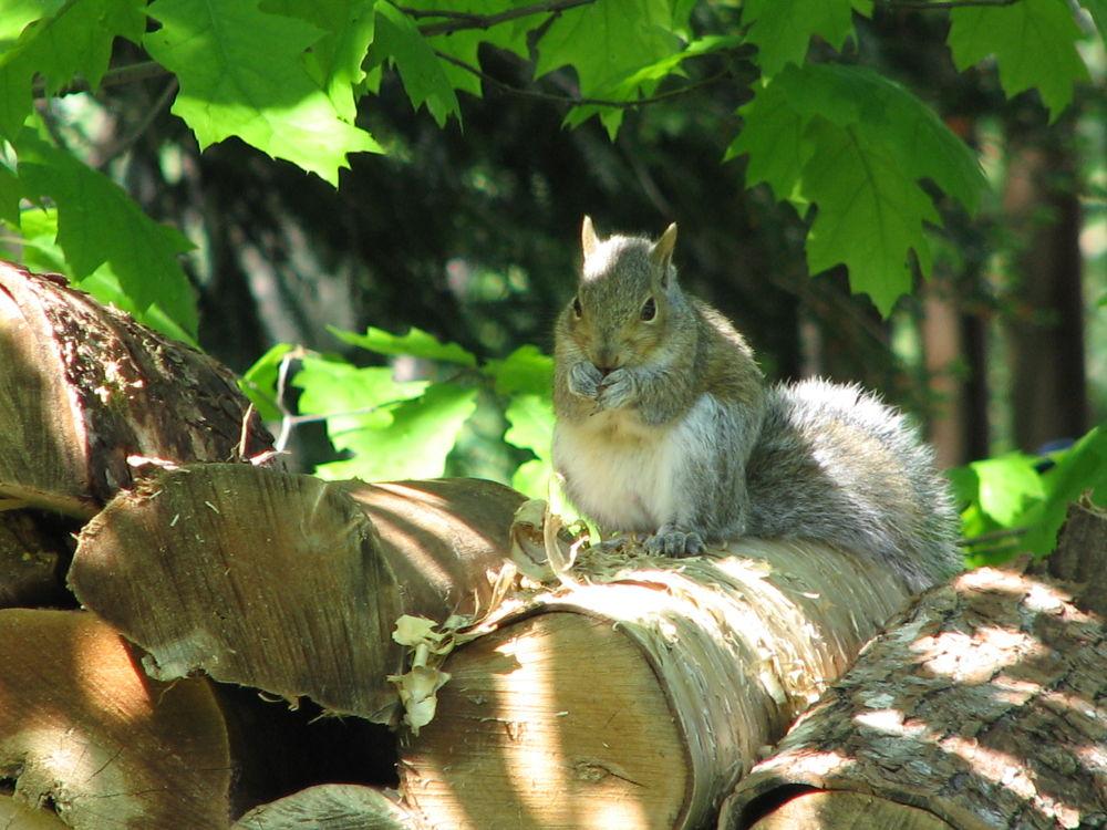 baby squirrel by Vivian Wilcox