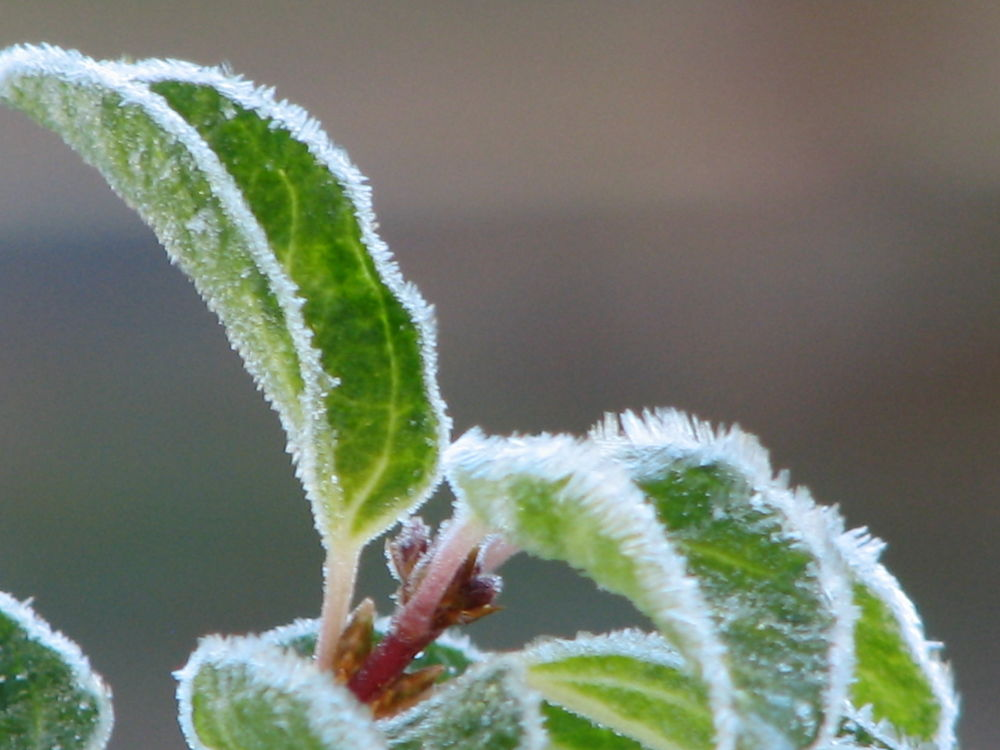 Touch of Frost by Vivian Wilcox