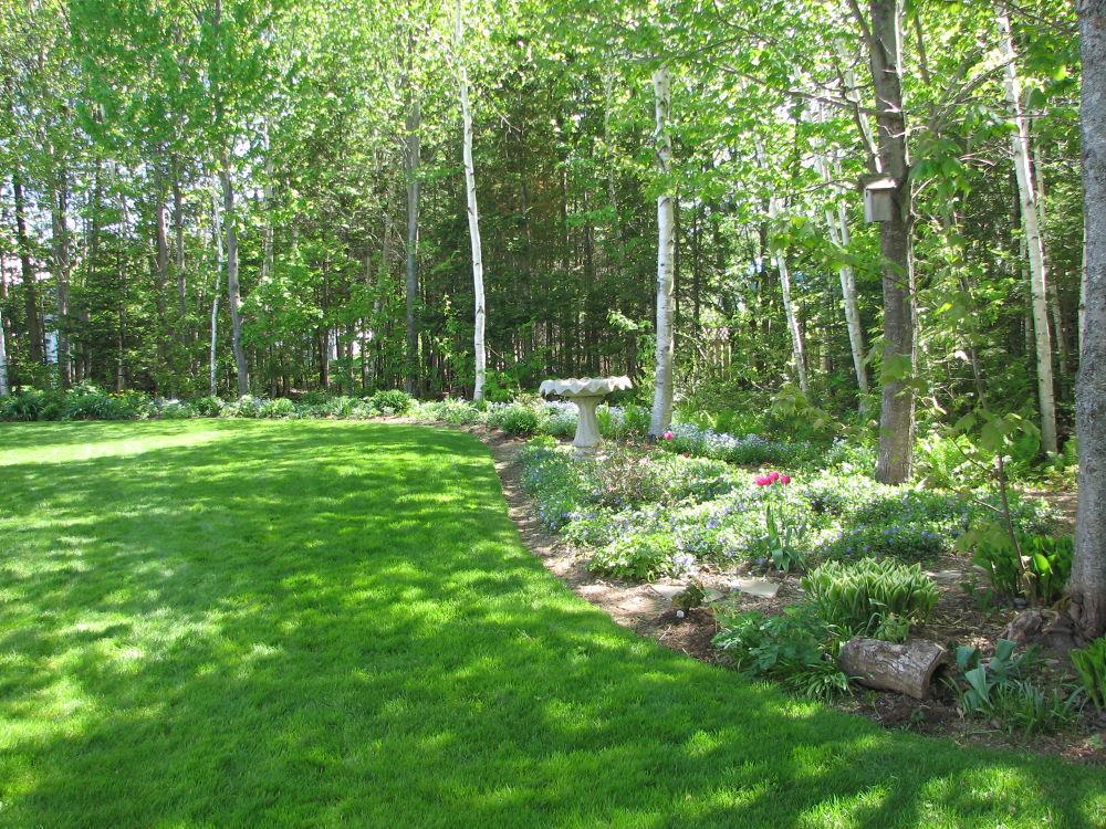 Spring in a backyard by Vivian Wilcox