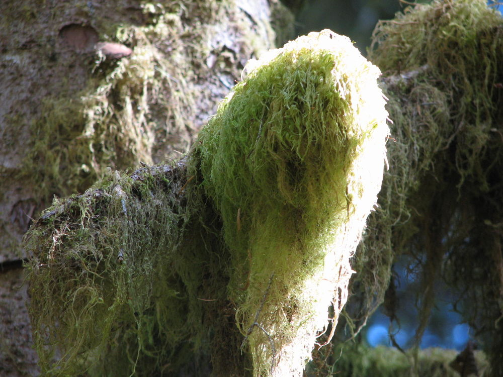 Rainforest moss by Vivian Wilcox