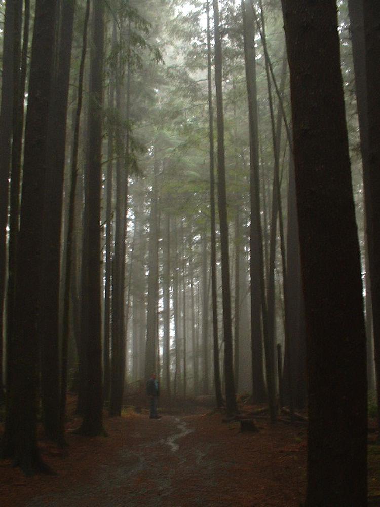 Rainforest, Vancouver Island by Vivian Wilcox