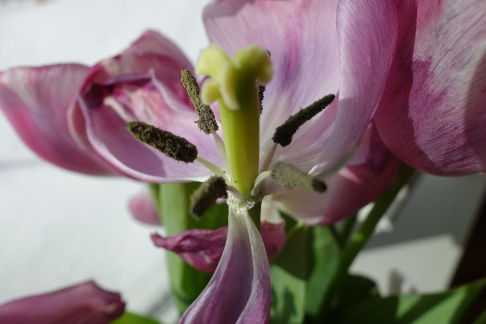 Petals have fallen by Vivian Wilcox