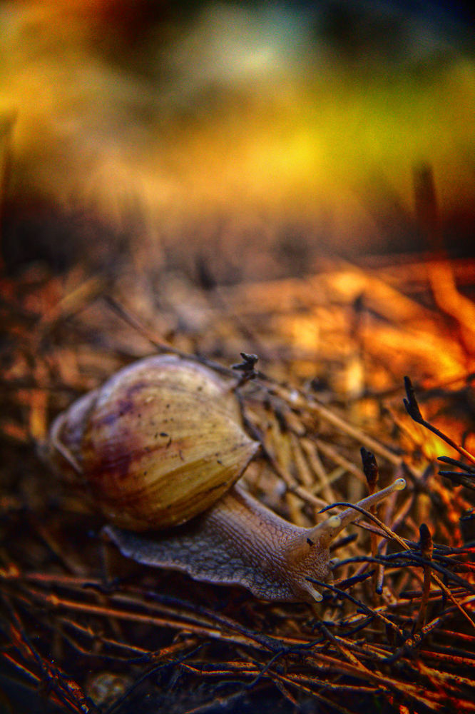 snail by Kenny Sudharto