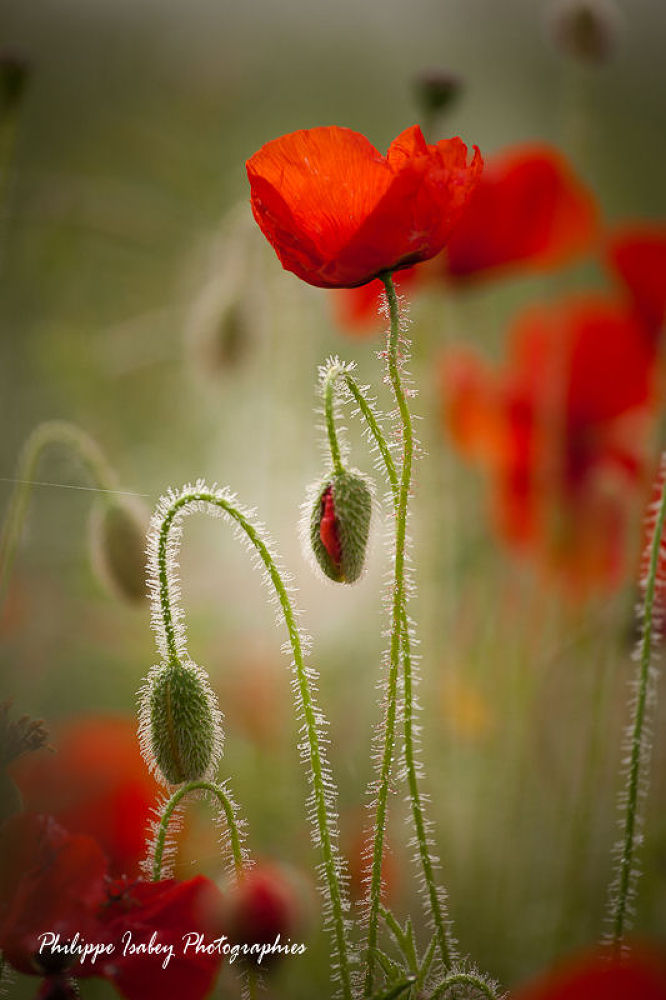 Life in red by philippeisabey