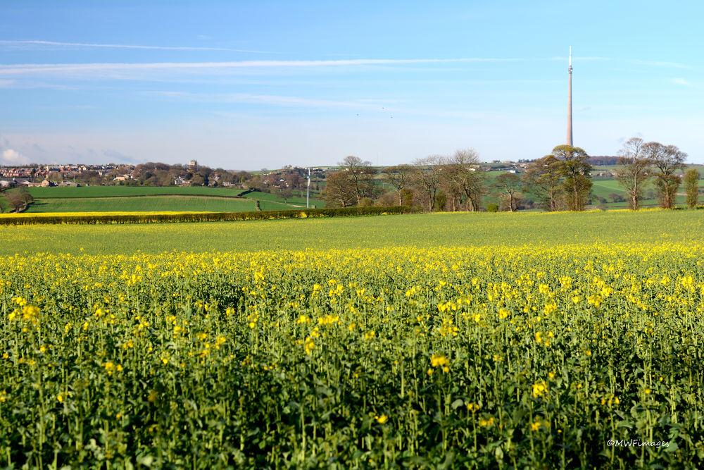Emley Moor, Huddersfield UK by martinfairbairn178