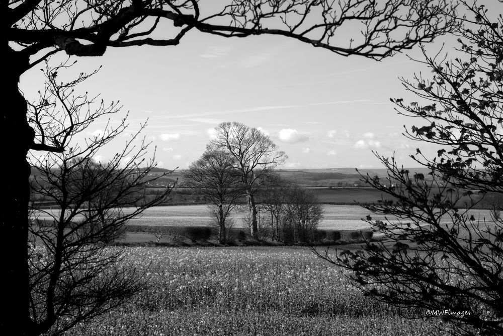 Framed by Nature. by martinfairbairn178