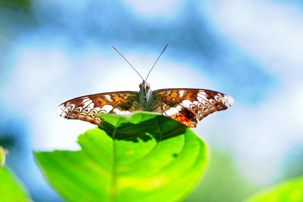I will fly by kanchanawatruangroj