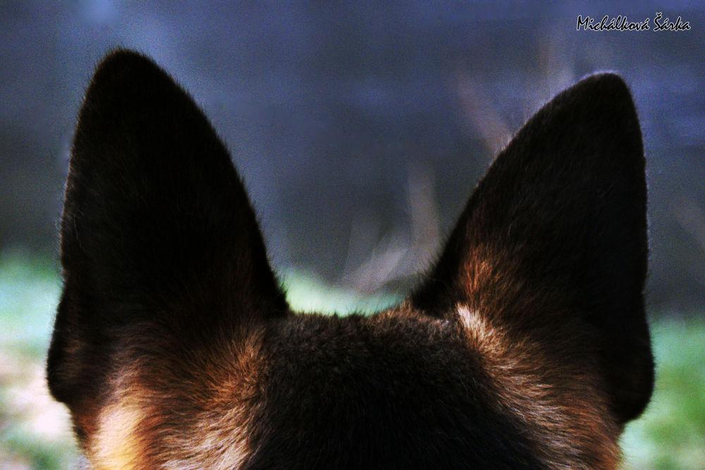 between the ears by sarkamichalkova