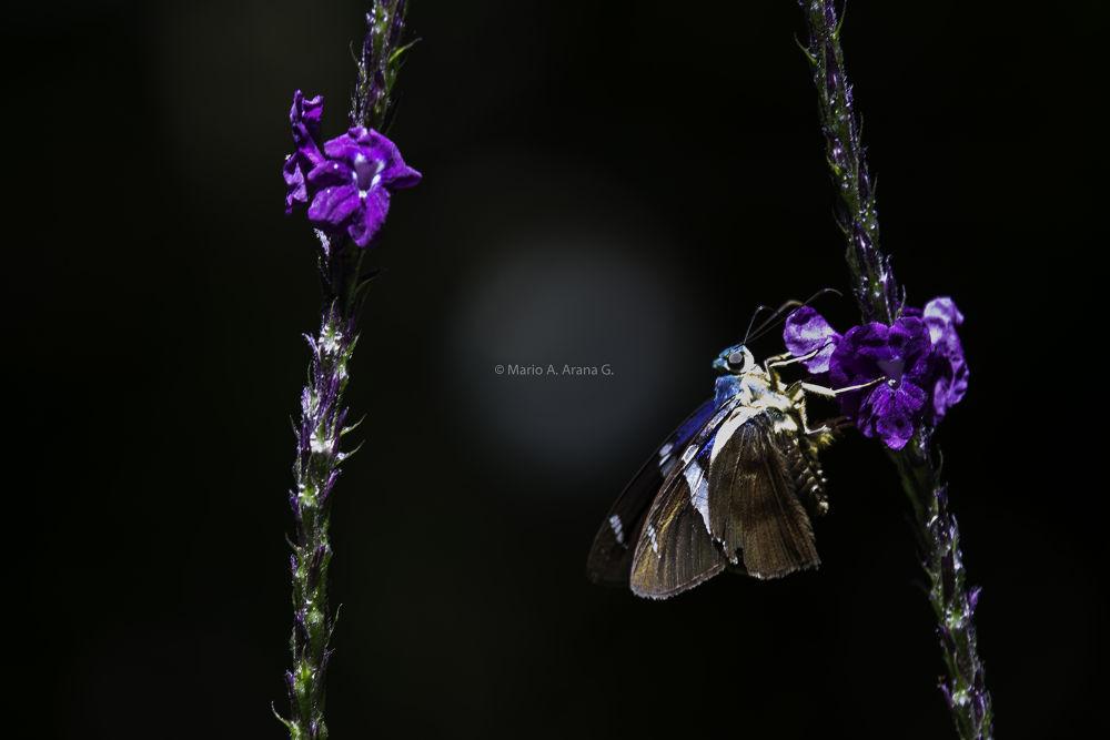 Mariposa-3 by Mario Arana Garcia