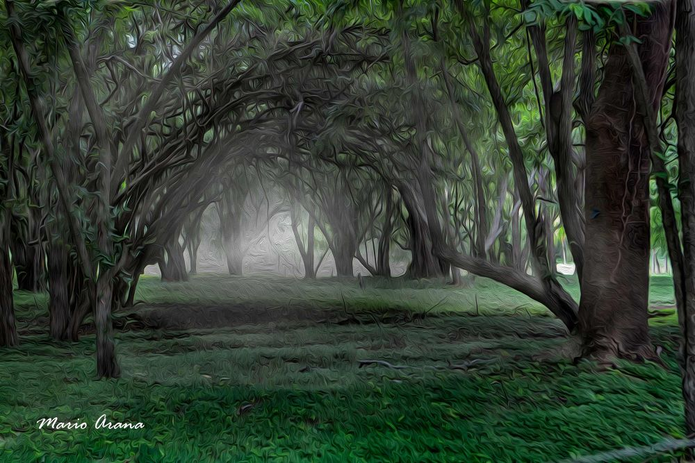 Bosque by Mario Arana Garcia