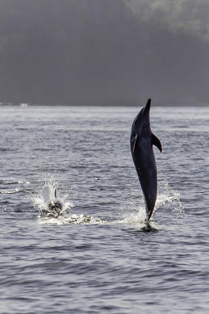 Delfin by Mario Arana Garcia