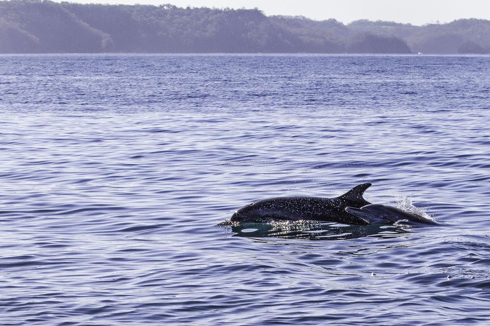 Delfin-4 by Mario Arana Garcia