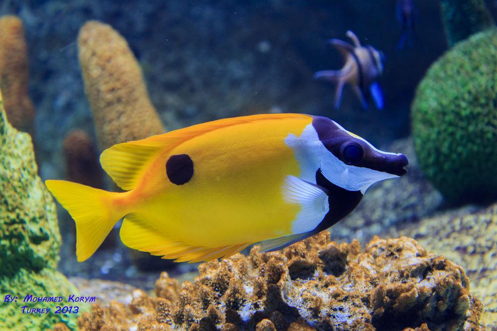 Istanbul Aquarium  by mmkorym