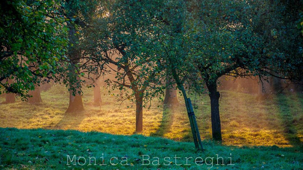 secret garden by monicabastreghi
