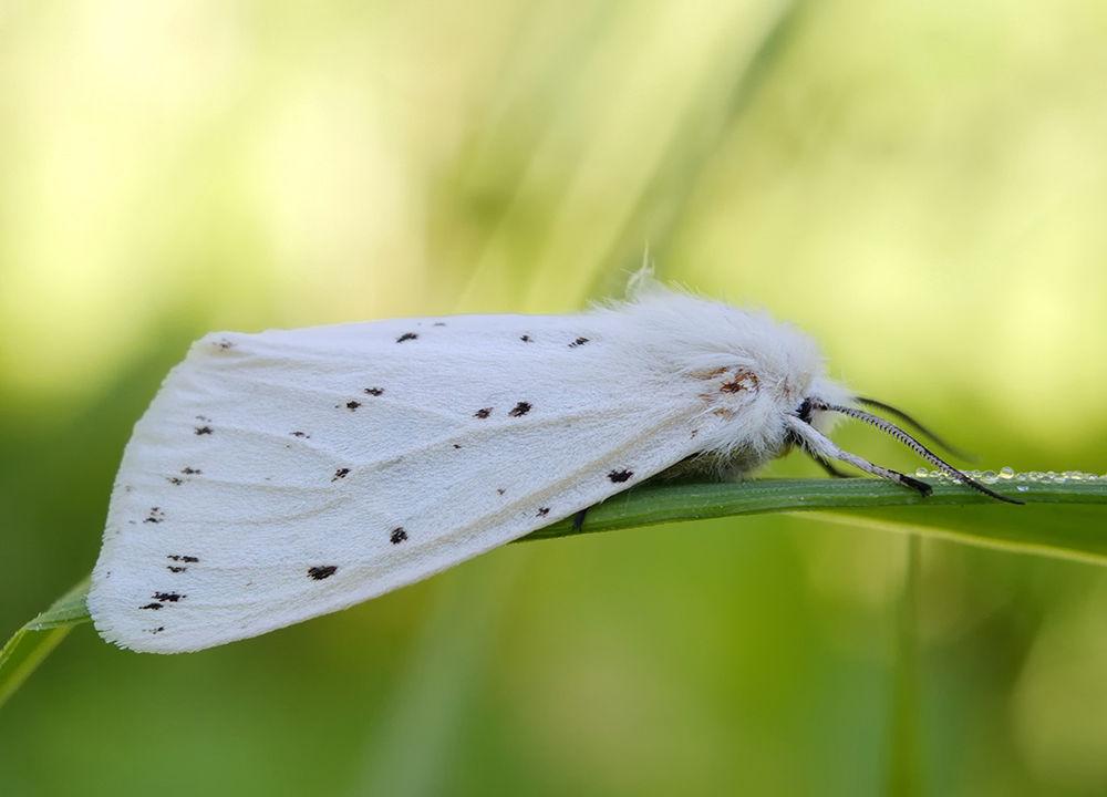 Butterfly by Gnilenkov