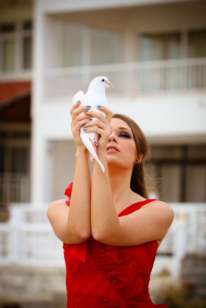 pigeon by photomi
