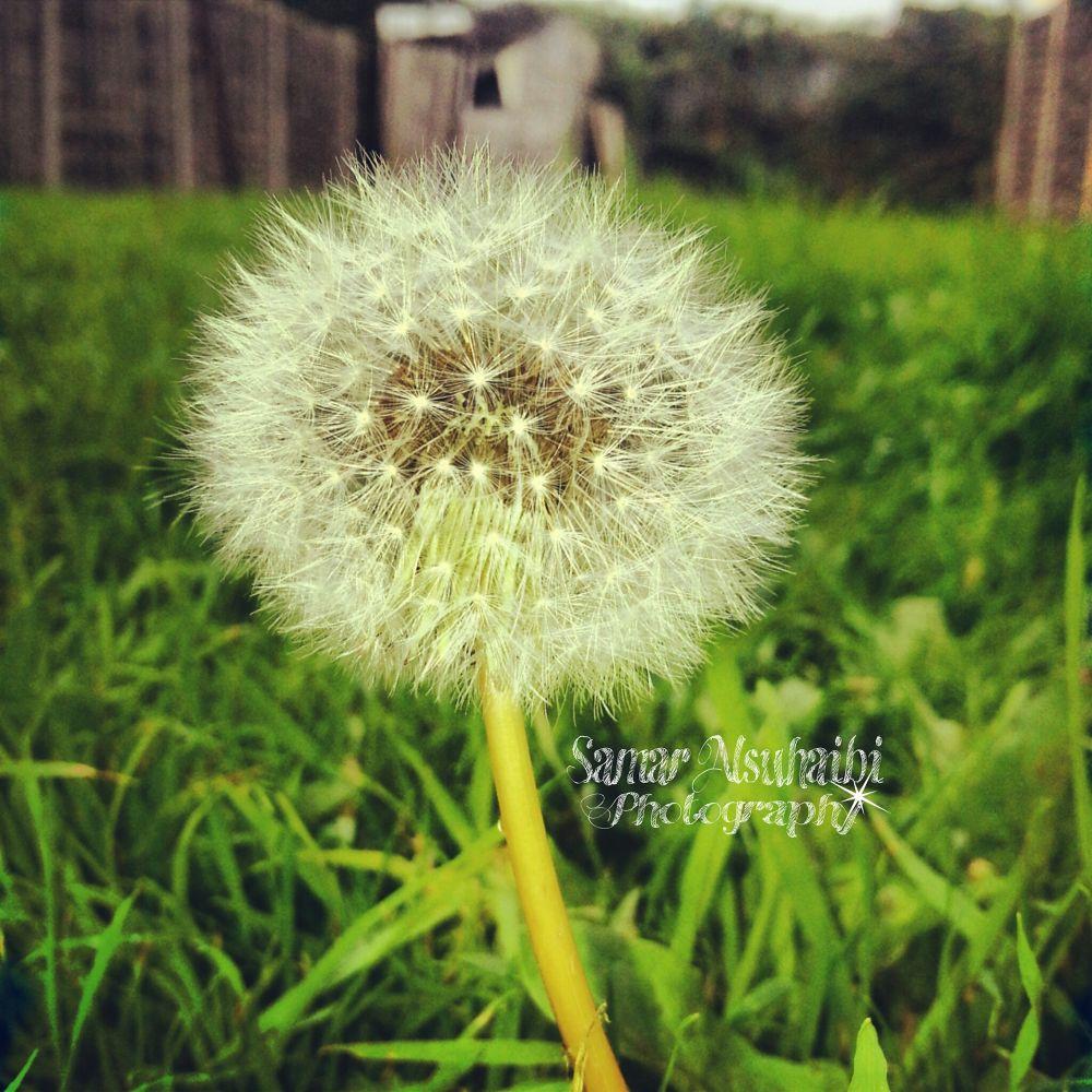 PicsArt_1380814853908 by S.Alsuhaibi