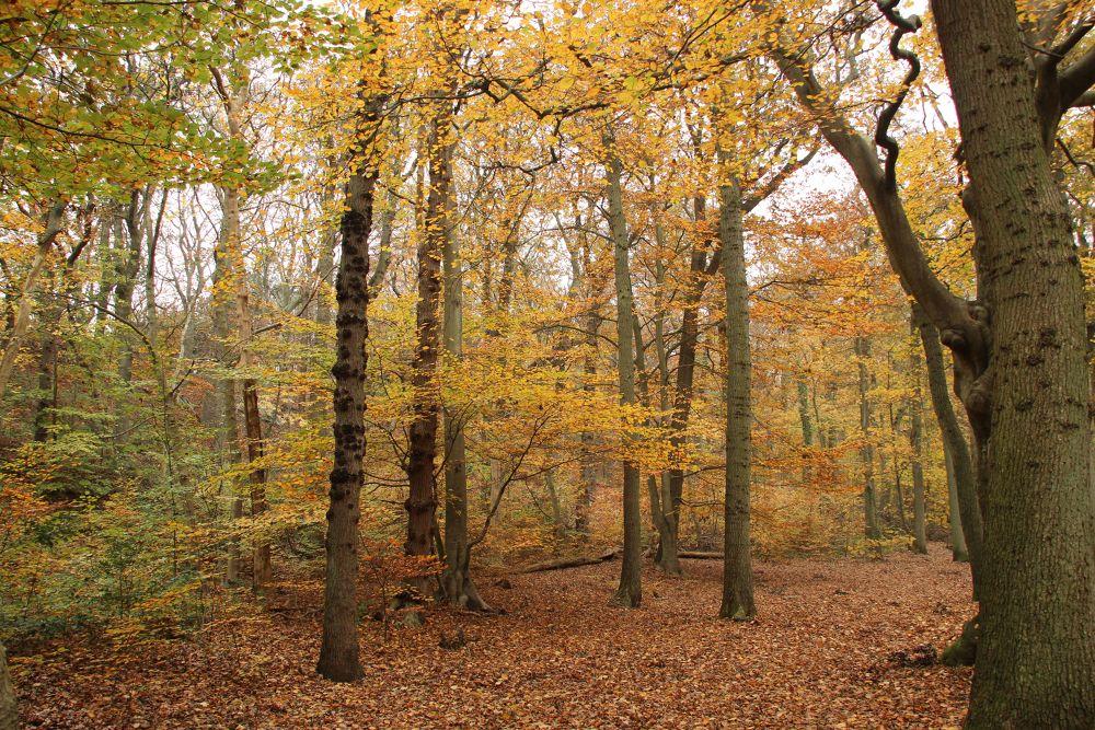 Bergense Bos by Henk de Groot