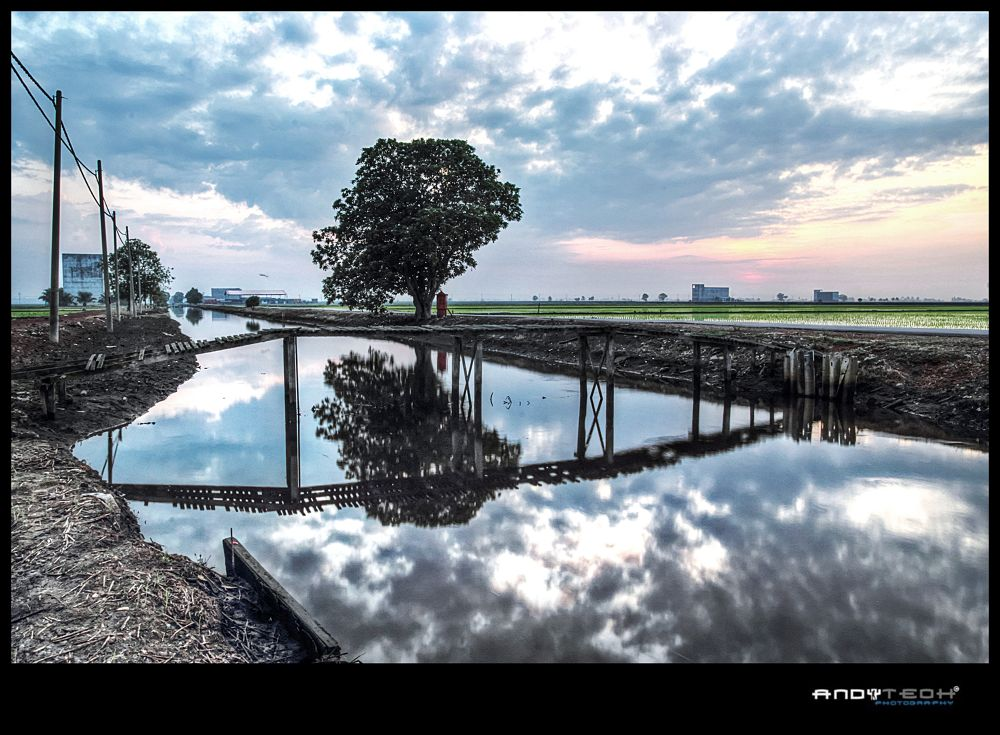 Morning Glory At Sekinchan by andyteoh73