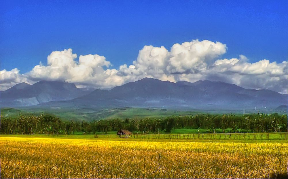 100_4383_ over_ under_tonemapped by AndyBuchory