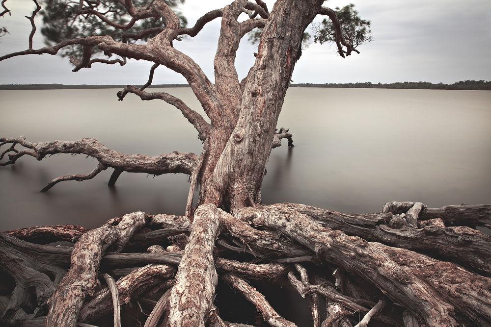 Photo in Random #noosa #lake wayba