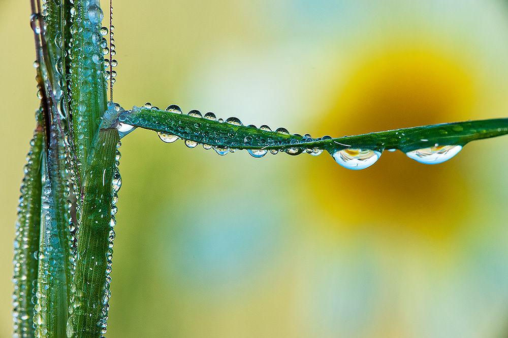dew drops by luigichiriaco
