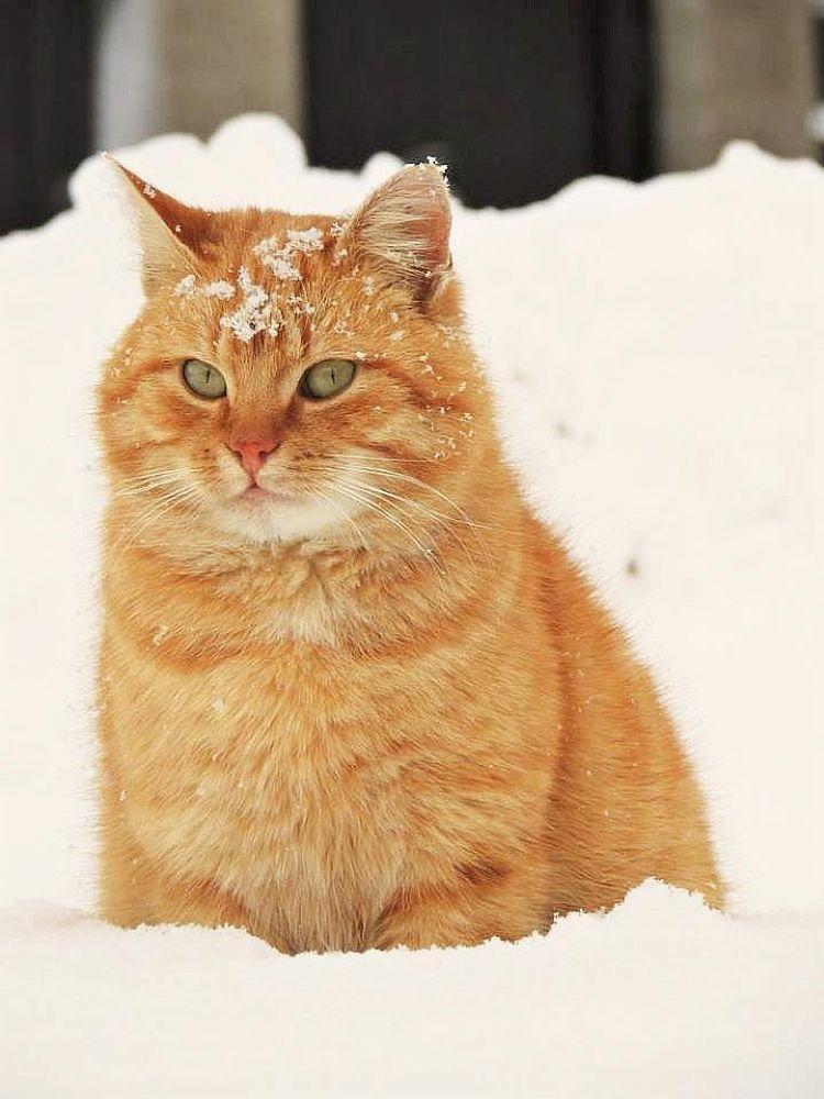 Cat Mogi by Karolína