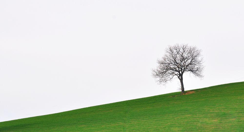 Minimal trees by MarcoBentivoglio