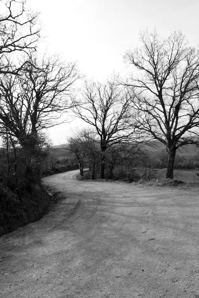 la strada nel bosco by massimilianofarneschi72