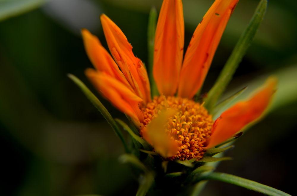Macro flower by Omar Andres Piedrahita Zapata