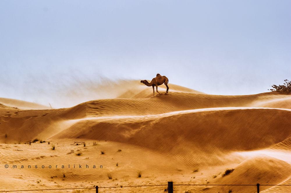 in the desert by Mansoor Ali Khan
