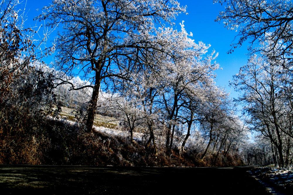 Winter by csereyandraszoltan