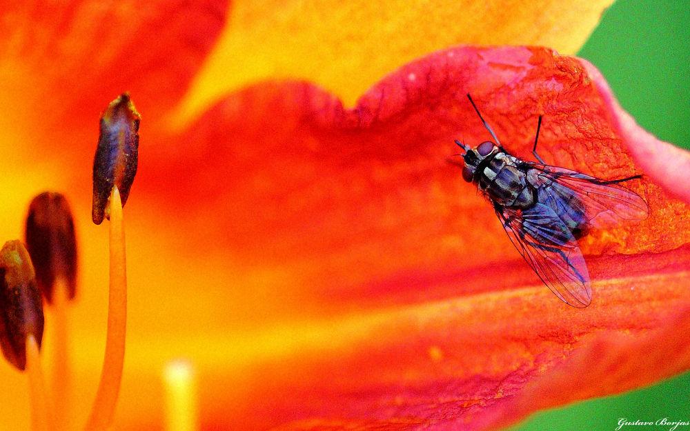 ...en el pétalo de una hermosa flor by Gustavo A. Borjas