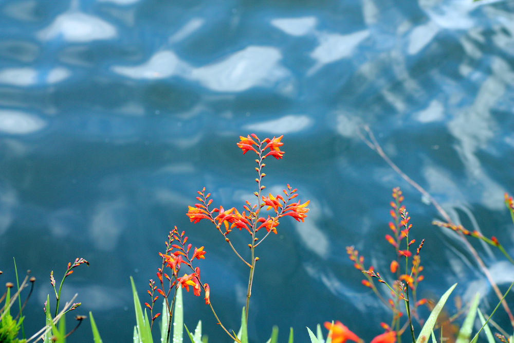 A la orilla de la laguna by Gustavo A. Borjas