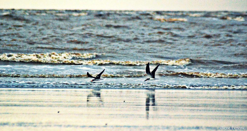 Photo in Nature #birds #praia do goiabal #amapá #amazonia