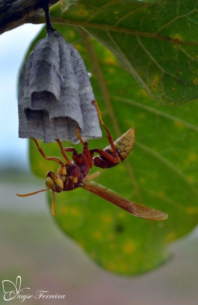 A wasp Transformer by Dayse Ferreira