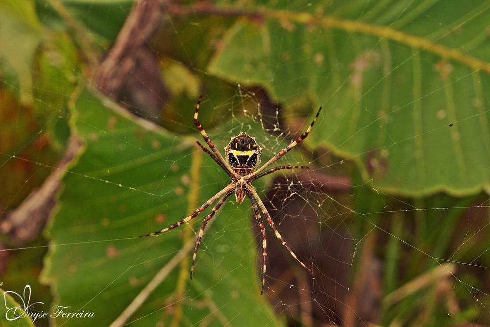 Photo in Animal #amazonia #aranha #animais