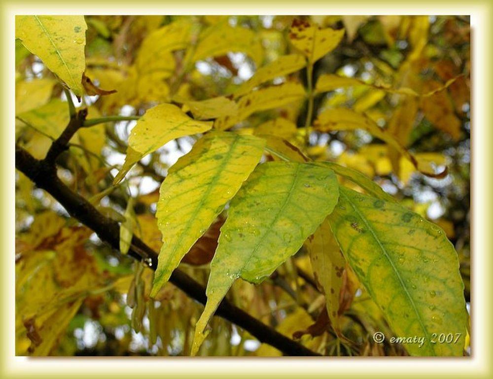 After autumn rain by ErikaM