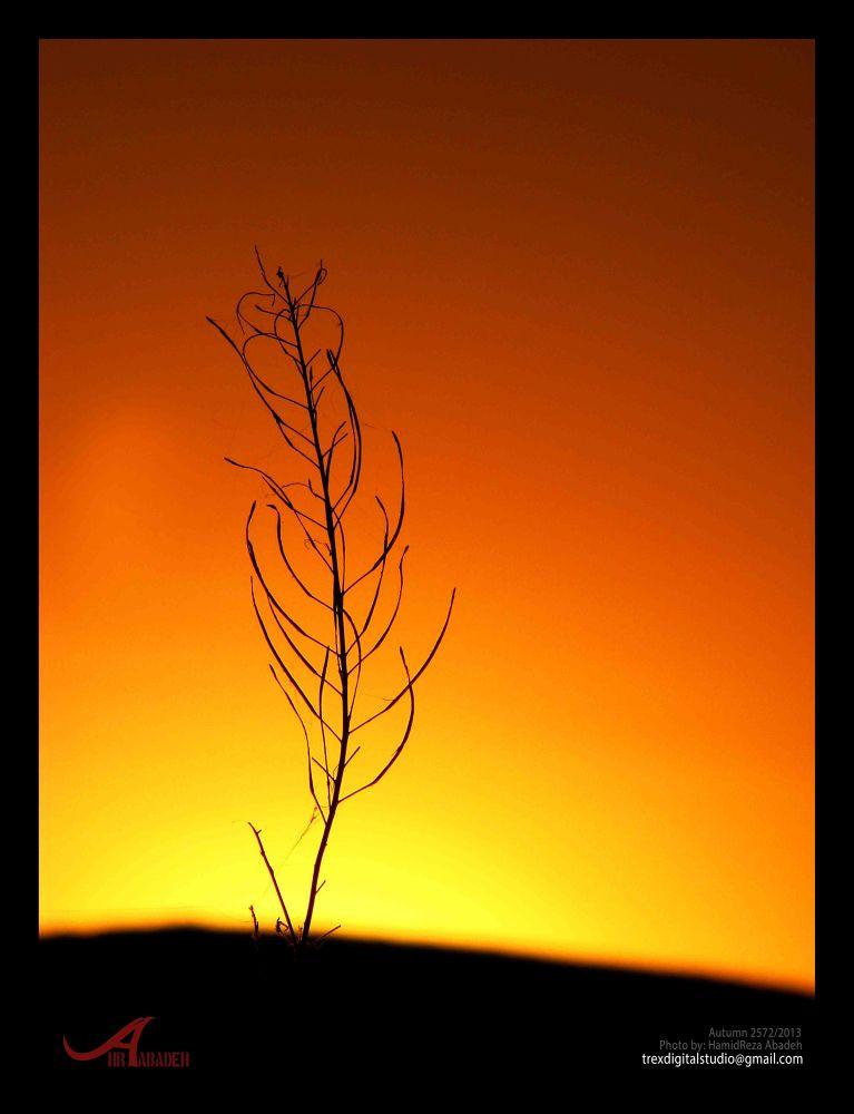 Photo in Fine Art #before dawn