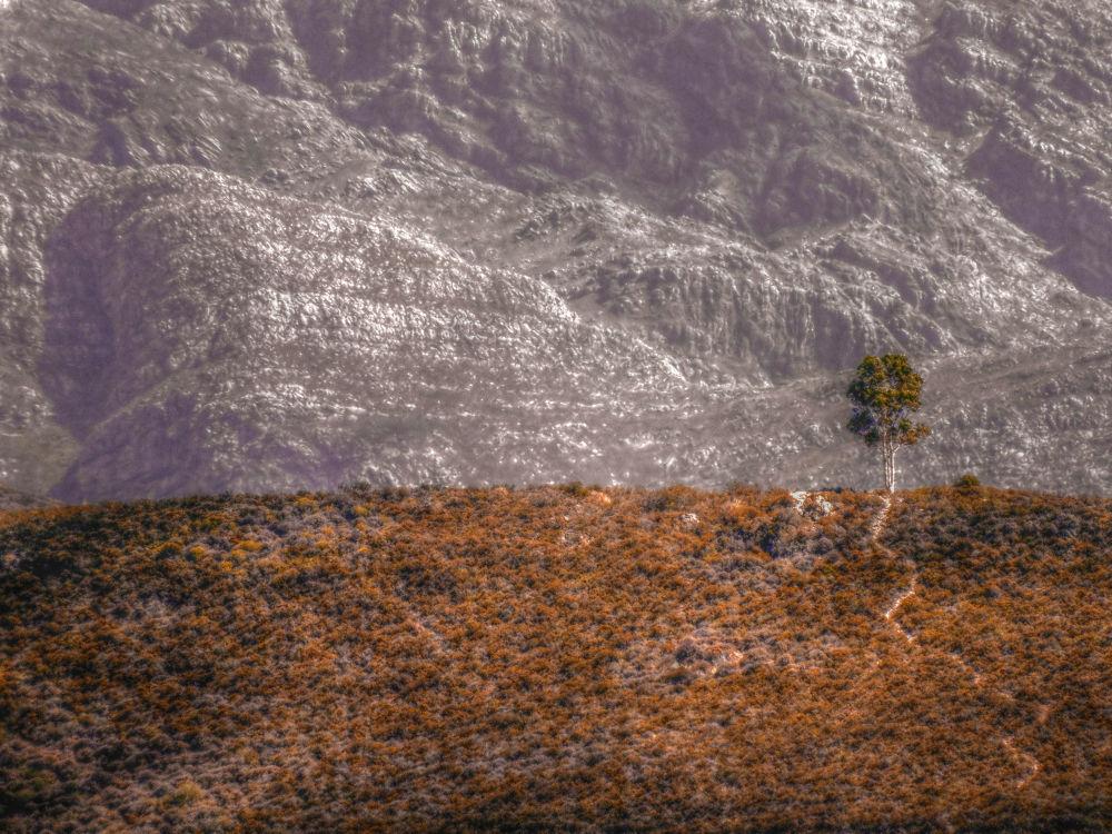 Tree of Life by serrao1