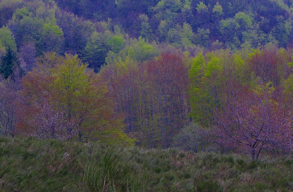 Wood Colors by GiampieroTorello