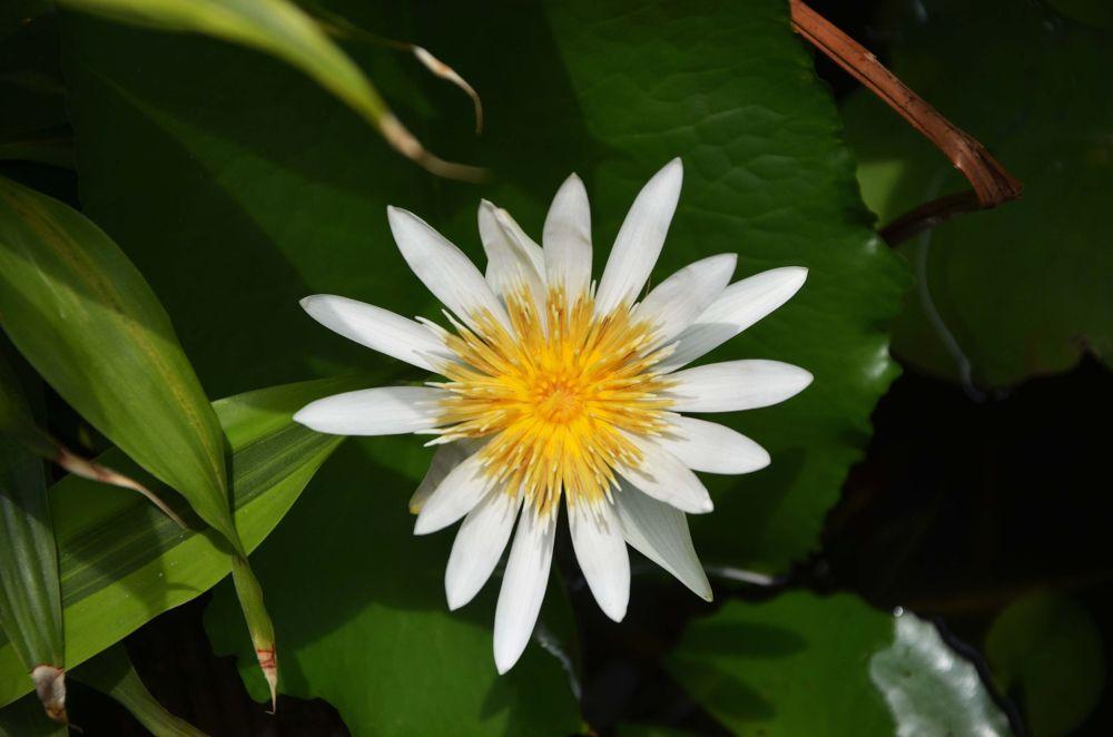 White Lotus 2 by tomdahlqvist3