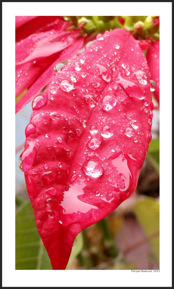 A Drop Of  Life by photoart9
