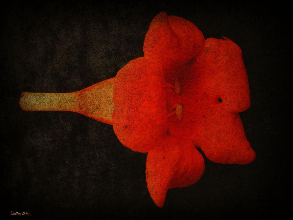 FLOWER_3 by CristinaOrtiz