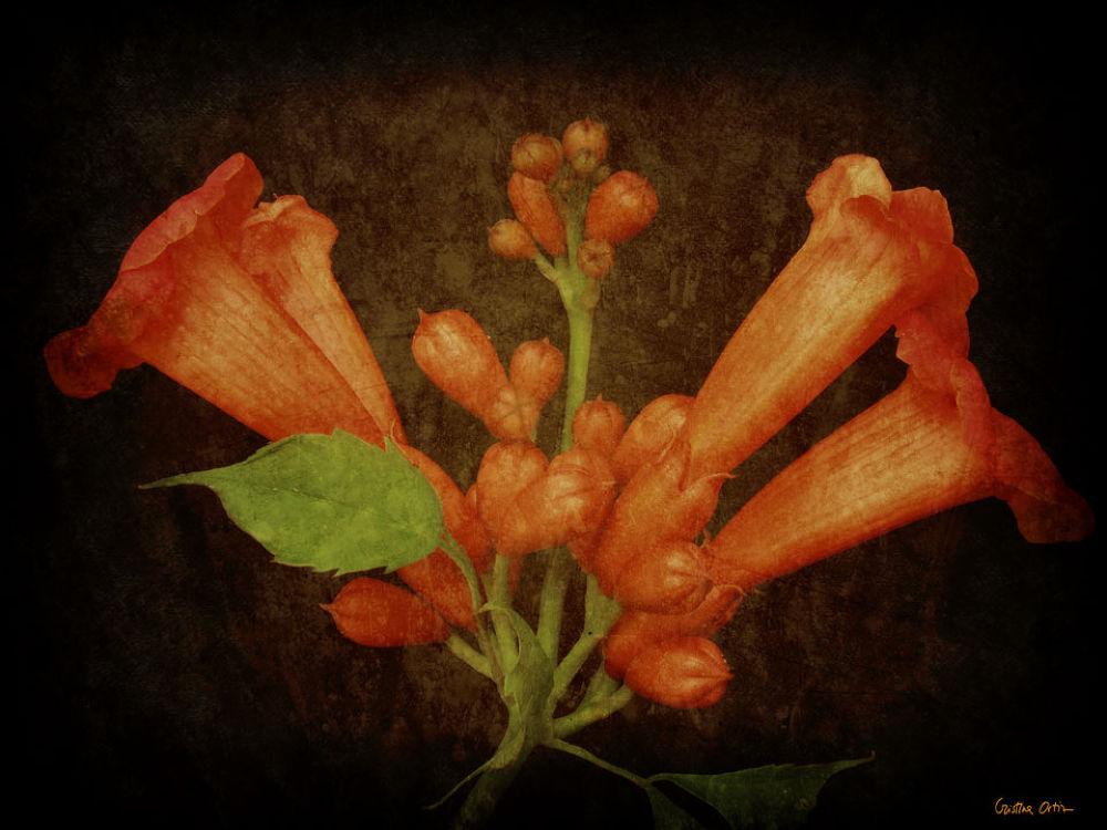 FLOWER_2 by CristinaOrtiz