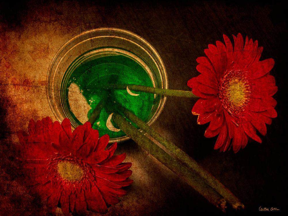 RED FLOWERS III by CristinaOrtiz
