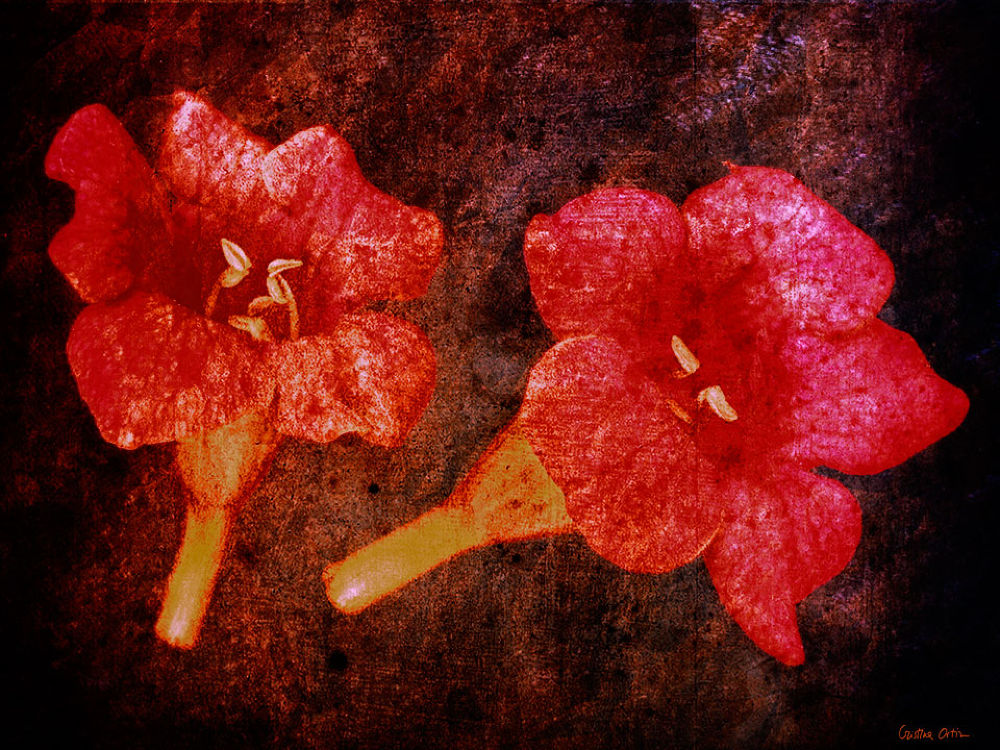 RED FLOWERS 5 by CristinaOrtiz
